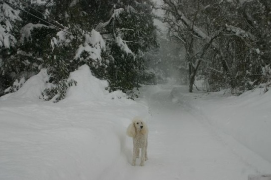 Oliver in a Winter Wonderland